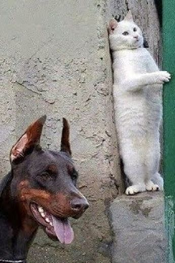 99.9% CHANCE that you will DIE LAUGHING // Ultra FUNNY CATS