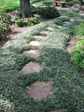 Dwarf Mondo Grass {50 Bare Root plants}