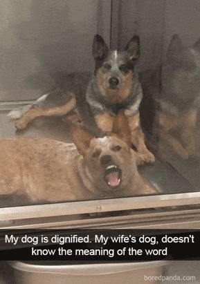 50 Hilarious Dog Snapchats That Are Impawsible Not To Laugh At (Part 5)