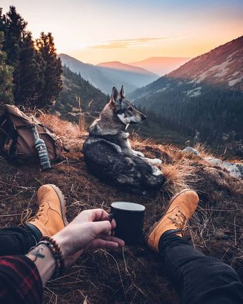 6 Things You Need When Going On A Hike With Your Dog - Dogtime