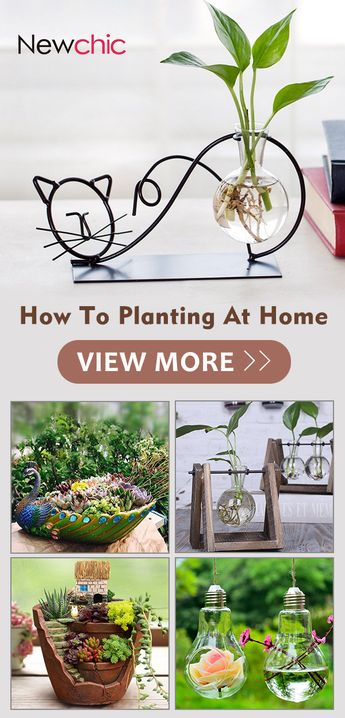 How to planting at home.