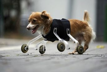 13 Animals Who Get a Second Chance With Prosthetics