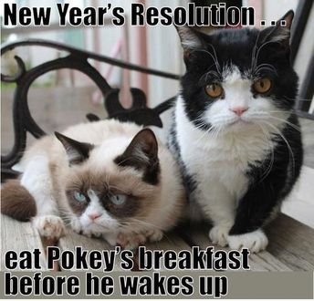 There Are 13 Different Things On The Resolution's List Of These Cats For 2019 (Memes)