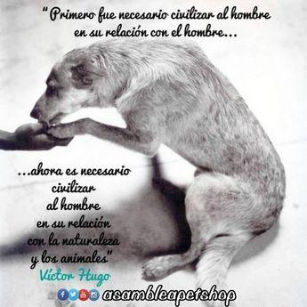 Seamos más animales. 💞. • El mundo sería más hermoso si tuvieramos corazón de perro 🐾🤗🐾 • • • #seamosmasanimales • #adopcionanimal…