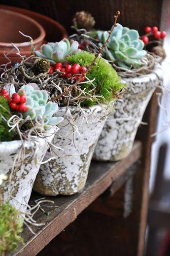 Christmas succulent pots