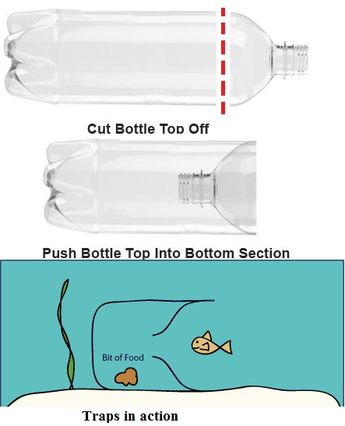 Trap fish bottle plastic