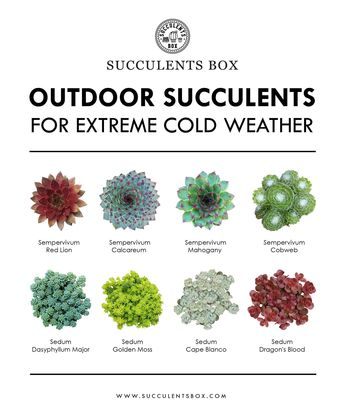 8 Types of Outdoor Succulents for Extreme Cold Weather