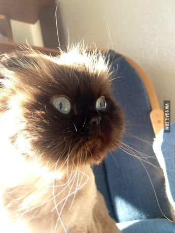 This cat has seen some things...
