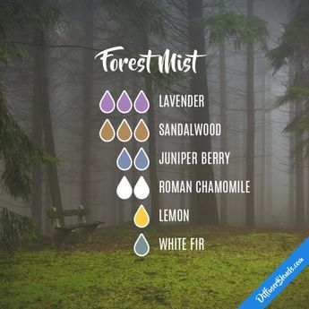 Forest Mist - Essential Oil Diffuser Blend
