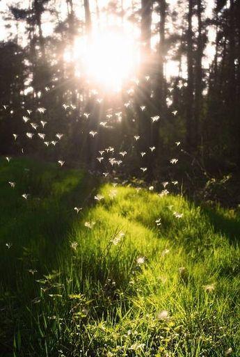 Beautiful sunlit forest