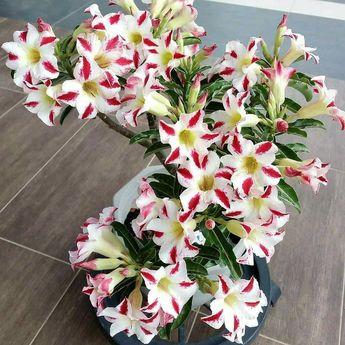 como cuidar de orquideas em apartamento como cuidar de flores orquideas #orquedeas como tratar orquedas duentes Como Cuidar de Orquídeas?