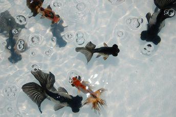 nature aquarium | Tumblr