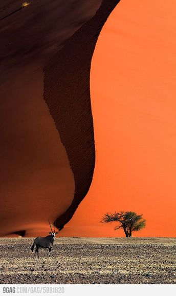 Oryx at the base of a sand dune.