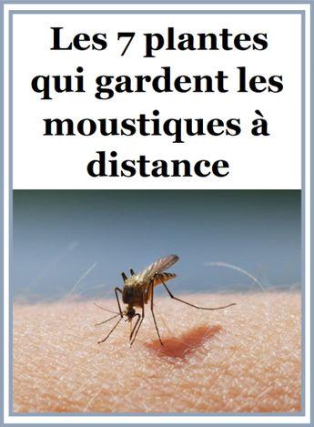 Les 7 plantes qui gardent les moustiques à distance