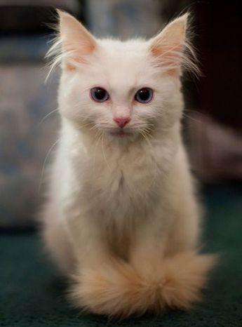 Amazing Kitten - 27th April 2015