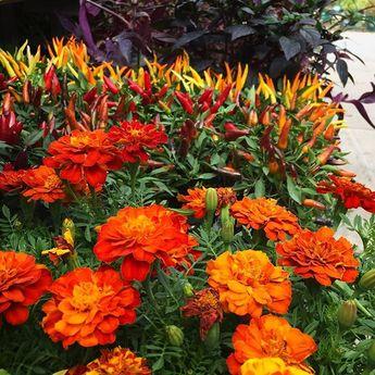 10 Low-Maintenance Perennials