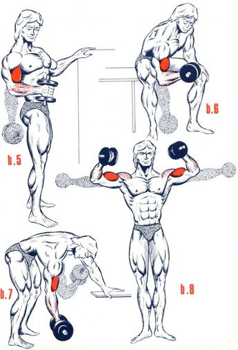 Exercices Biceps