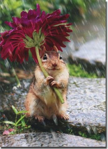 Chipmunk With Flower As Umbrella Get Well Card - Greeting Card by Avanti Press