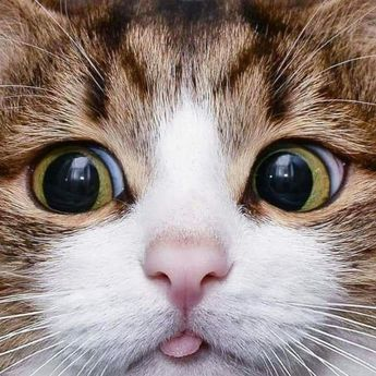 25 Photos Proving That Cats Are The Cutest Things On Earth
