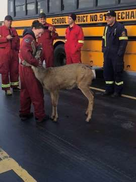 Deer spotted hugging firefighter on Canada ferry