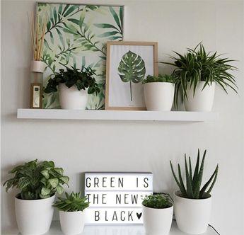 ¡Verde que te quiero verde! Cómo integrar plantas en la decoración de tu casa