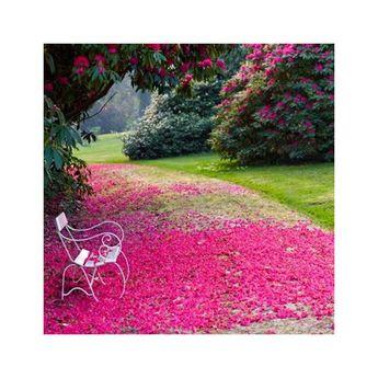 Piovono petali per chi ha desiderio di leggerezza.  Its raining flower petals for those looking for lightness  www.rbplant.it #rbplantalbenga #albenga #pianteinvaso . . . #pianteinvaso #fiori #liguria #liguria #flowers #naturelovers #garden  #gardencenter #garten #jardin  #blomster #blomster #bloemen #blumen #flowerlovers #instaflowers #instaflor #garden_explorers #flowermarket #gardening_feature #centredejardin #naturelovers #garden  #gardencenter #garten #jardin #centredejardin #homesweethome
