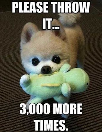 Funny Animal Pictures Of The Day - 30 Pics #dogmemesfunny #dogmemes