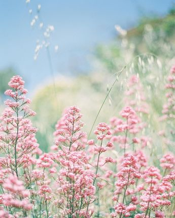 Pink Wildflowers ~ Mary Wald's Place