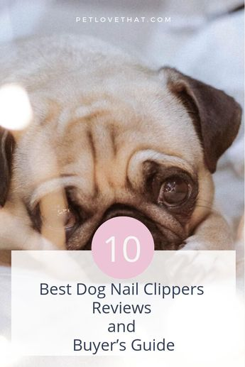As a pet owner, you need to groom your canine friend regularly as a part of your caring routine. However, grooming your dog is not limited to just washing and brushing their bodies. It also entails trimming their nails on a regular basis. If your dog nails are too long, he may have a difficult time walking on slippery ground. Nails can also get caught in your house mats or make marks on your flooring which will be uncomfortable for your dog and can damage the flooring of your house.