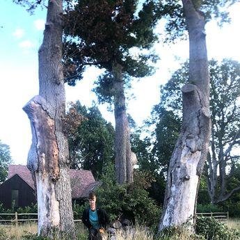 Keeping to the schedule! #oak #oaktrees #tree #trees #garden #development #dead #garden #iphone… – combustive-argument