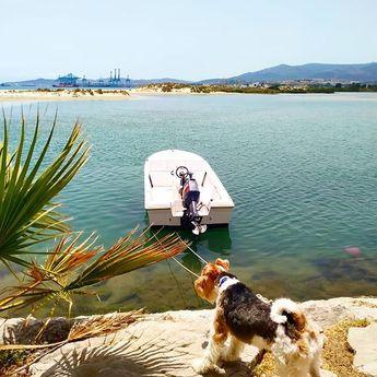 🥰🥰❤❤😊 • • #summertime #beach #foxterrier #love #family #pets #wirefoxterrier #palmones – catholic-velocities