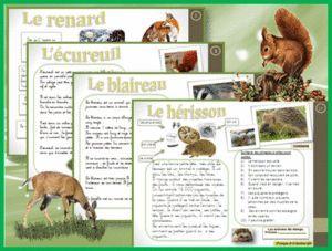 LECTURE : ATELIER en AUTONOMIE – Les animaux de la forêt et des champs (ReCreatisse)
