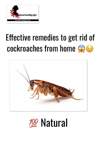 Effective remedies to get rid of cockroaches from home