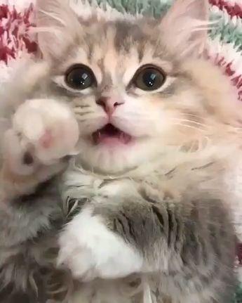 Holy beautiful eyes. #cats #catlovers #funnycats #katzen #majaempfiehlt #www.majaempfiehlt.de