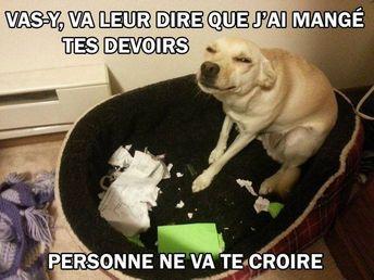 Images Droles Francais (Vas y va leur #dire que j... ) =) #droles #francais #images #imagesdrolesfrancais
