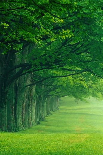 """When I see trees like this I think of the """"Gnomemobile"""" song"""