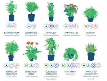 According to NASA, you should have these plants in your house. They help purify the air!