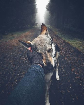 Tired Of #FollowMeTo Instagram Pics? This Guy Pets His Dog Everywhere He Goes, And It's 36 Times Better