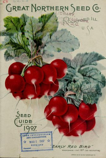 Front cover of 'Great Northern Seed Co's Seed Guide 1907′ with an illustration of 'Early Red Bird' radishes. U.S. Department of Agriculture, National Agricultural Library. Biodiversity Heritage Library. archive.org