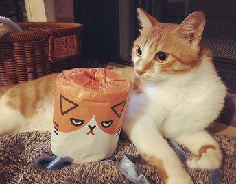 うちの長男 夜は黒目が大きくて優しい目してる。 #ちくわ #愛猫 #ふてにゃん