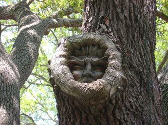 Sculptor Keith Jennings creates Tree Spirits by carving sage-like faces into the oaks and hardwoods of Saint Simmons Island, off the coast of Georgia