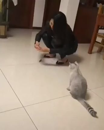 Funny Pet Gifs Too - Clips Of Pets Doing Funny Things