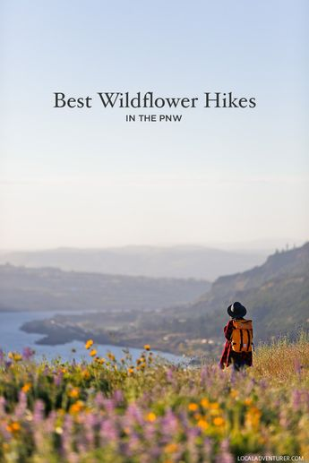 Best Hikes to See Pacific Northwest Wildflowers (Oregon and Washington)