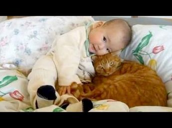 Cute cats cuddling and playing with babies - Cat & baby compilation - YouTube