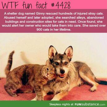 even animals show compassion