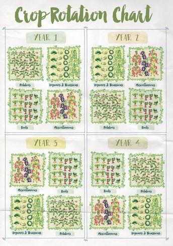 Rotation des légumes au potager #jardin #potager #garden #rotation #légumes #vegetables
