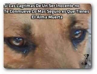 Salvar vida inocente!!!