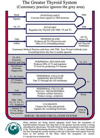 Thyroid Levels Chart