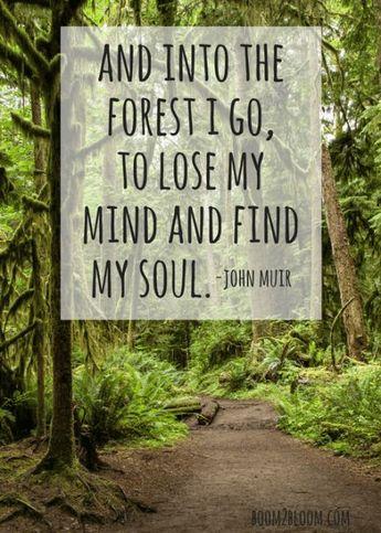 John Muir Forest Quote & Art Print
