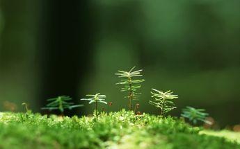A #Beautiful view of #Fresh macro #green grass HD #wallpaper.